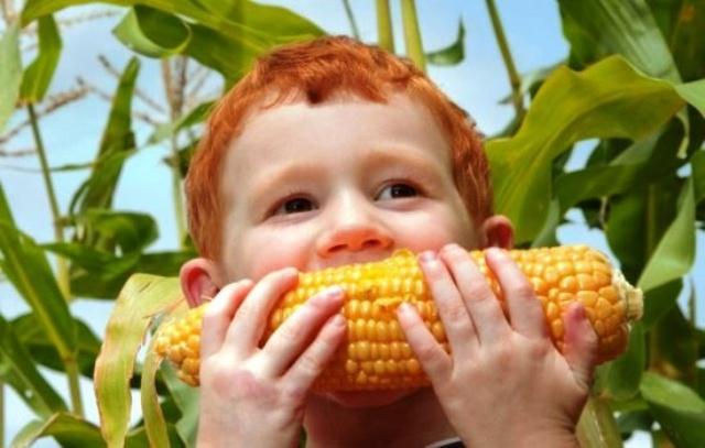 Кукурузное масло: полезные свойства и противопоказания для детей