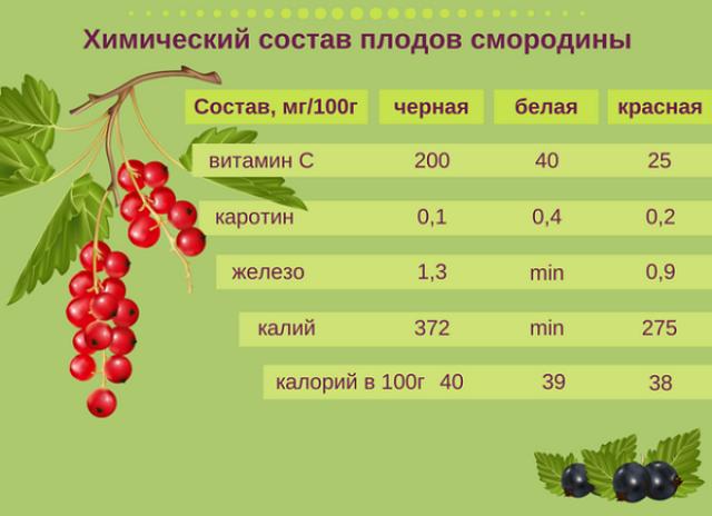 Состав ягод черной и красной смородины