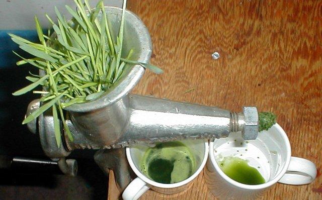 Пырей ползучий: сок из корней и стеблей