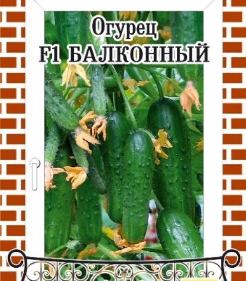 Семена Огурцы на балконе