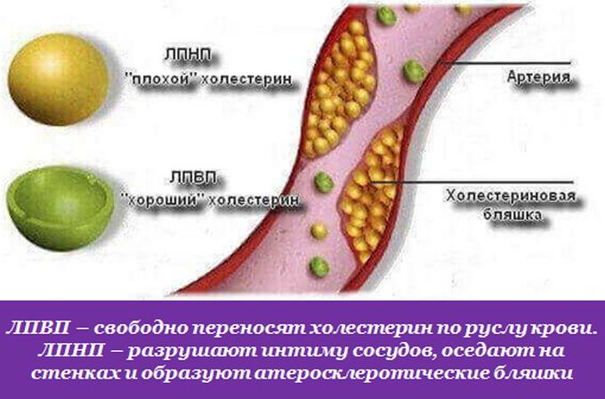Что кушать при повышенном холестерине
