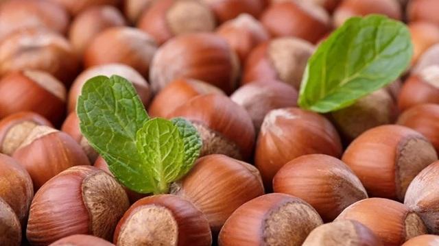Польза и вред при применении орехов фундука