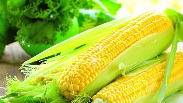 Кукурузное масло: полезные свойства и противопоказания, початок кукурузы
