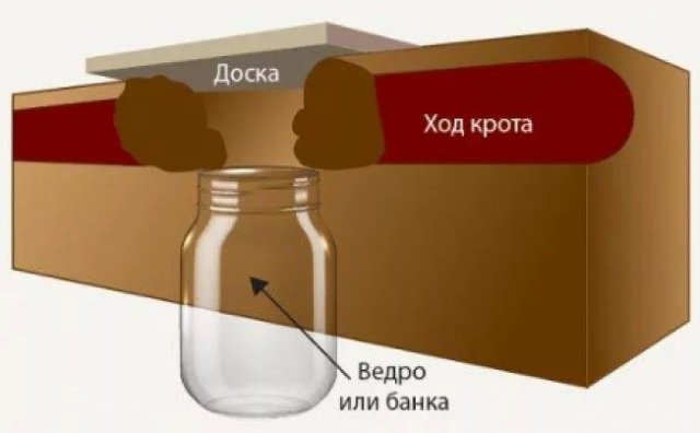 Как избавиться от кротов на участке: самый эффективный способ. Ловушка для кротов