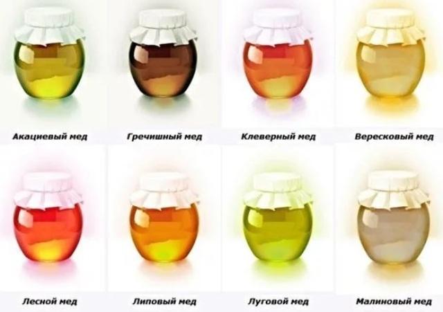 Разновидности и какой мед полезнее