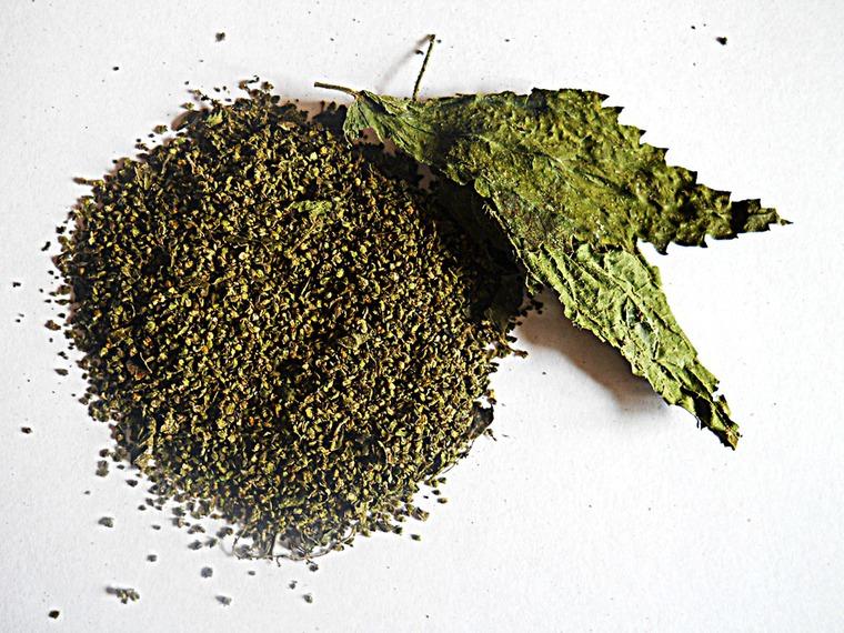 фото: семена крапивы