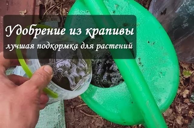 Подкормка из крапивы