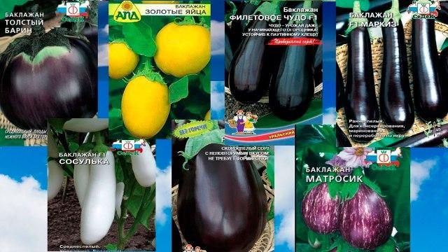 семена баклажанов разные сорта